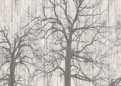 163 winter forest